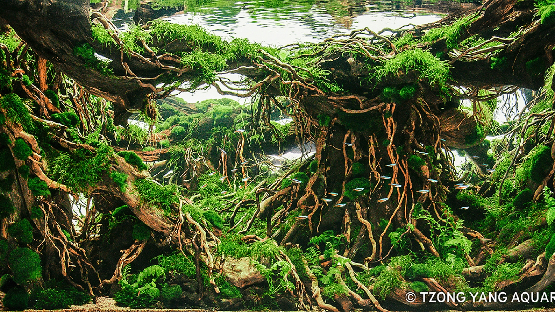 Flooded Forest Aquascape - Aquascape Ideas