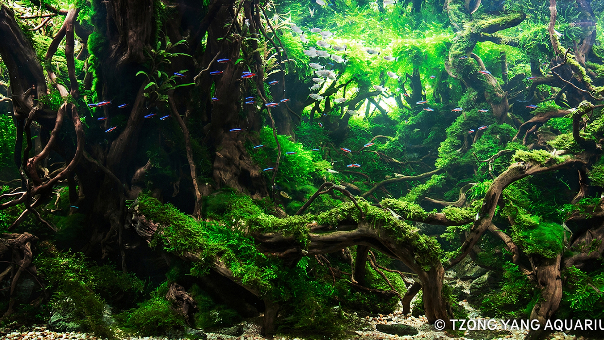 Aquascape malaysia 28 images 202l biotope aquascape still waters of malaysia malaysia klcc - Gallery aquascape ...