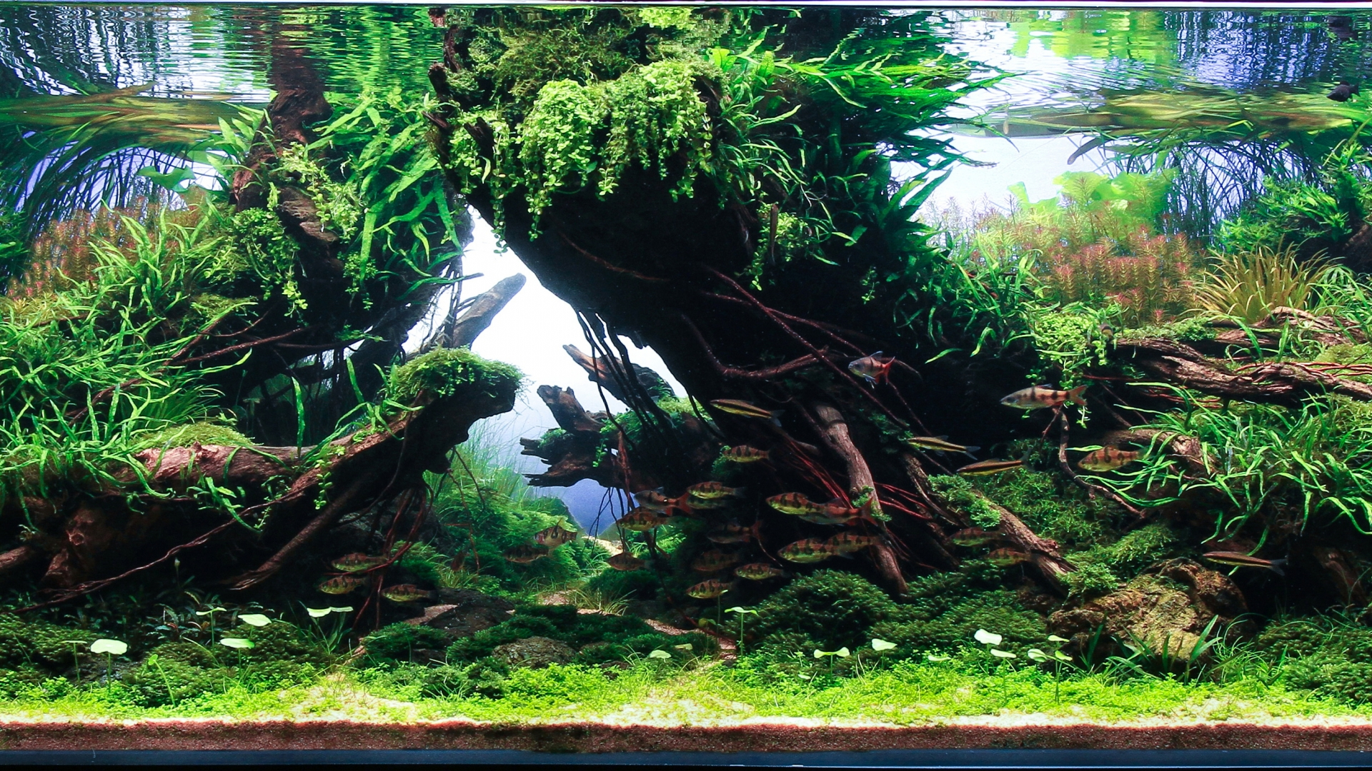 Previous Years Contest 2020 Iiac Aquascaping Contest
